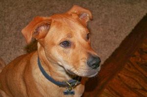 Cooper the Wonderdog.